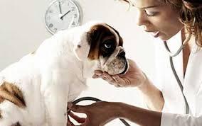 anaplasmosi cani
